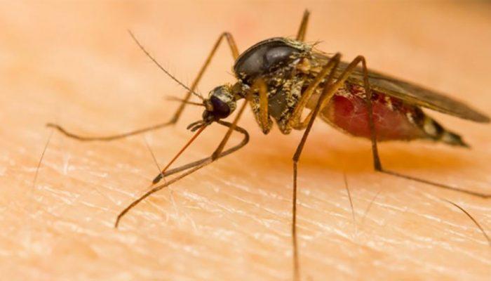 डेंगुका बिरामी बढ्दै जाँदा कीट अभावको चिन्ता