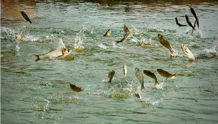 सुनसरीमा माछा र मासु उत्पादनमा वृद्धि